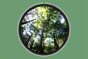 Leaf Area Index
