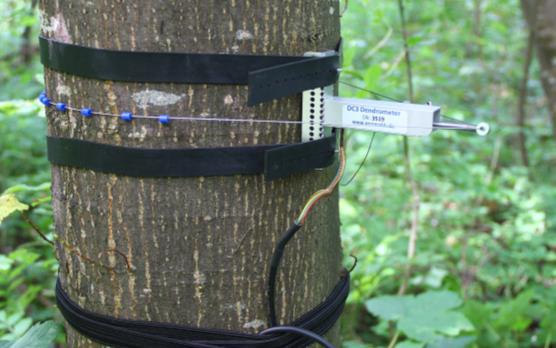 DC Ecomatik Circumference Dendrometers (M-XL Stems)